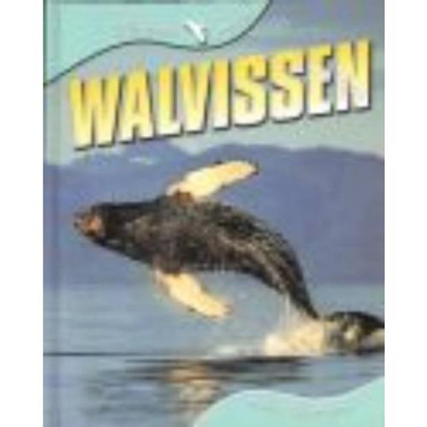 Walvissen - Dierenleven