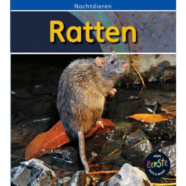 Ratten - Nachtdieren