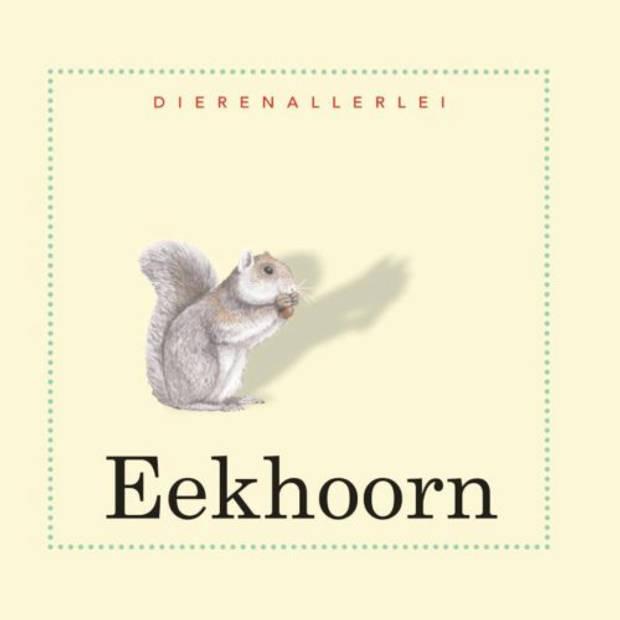 Eekhoorn - Dierenallerlei