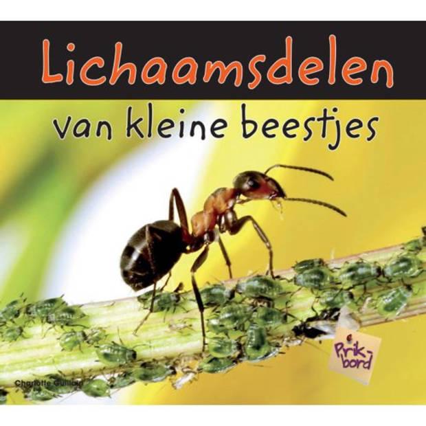 Lichaamsdelen Van Kleine Beestjes - Kleine