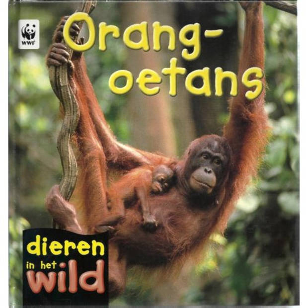 Orang-Oetans - Dieren In Het Wild