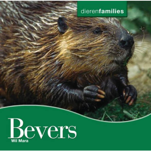 Bevers - Dierenfamilies