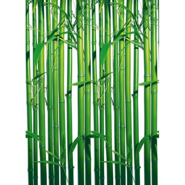 Bamboo - 183 x 254 cm - Groen