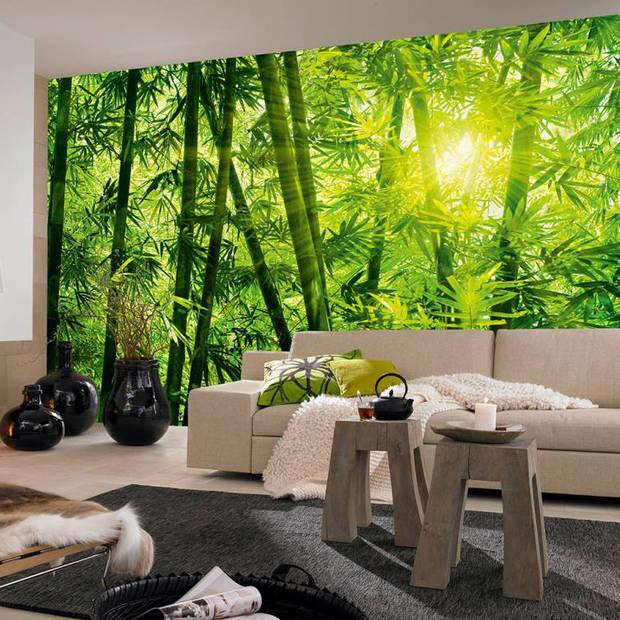 Fotobehang Bamboo Forest (366 x 254 cm)