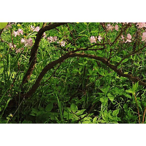 - Park in the Spring - 366 x 254 cm - Multi
