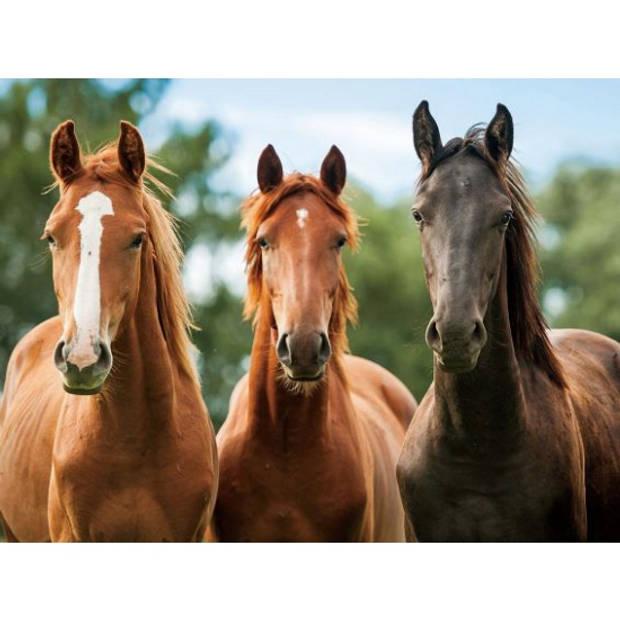 Placemat drie paarden 3D 30 x 40 cm - Knutsel of ontbijt/diner onderleggers