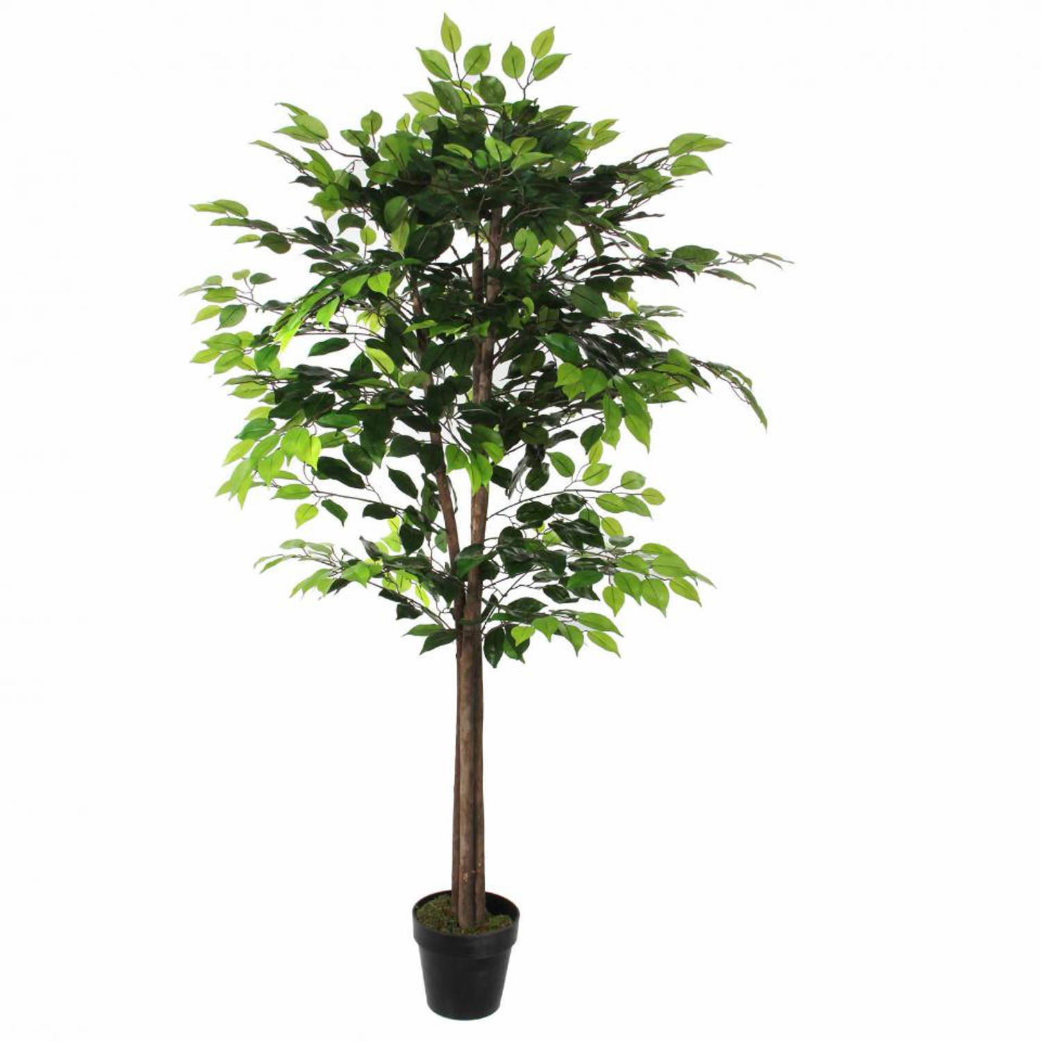 Mica decorations Ficus in pot 165 x 65
