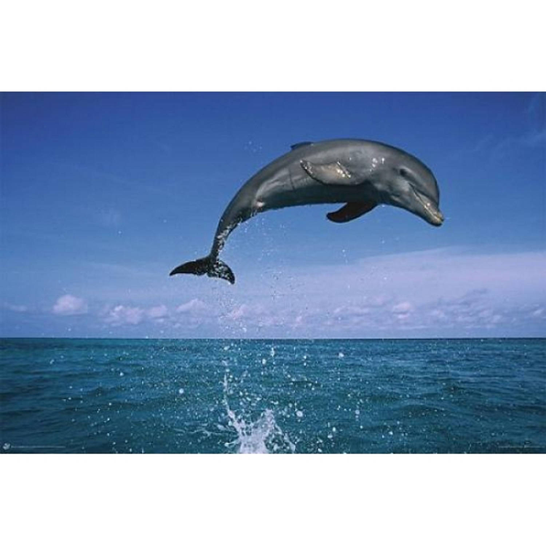 Poster Dolfijn 61 X 91,5 Cm