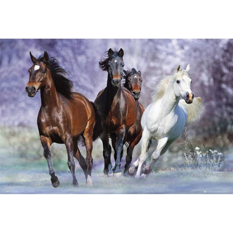 Poster Rennende Paarden 61 X 91,5 Cm