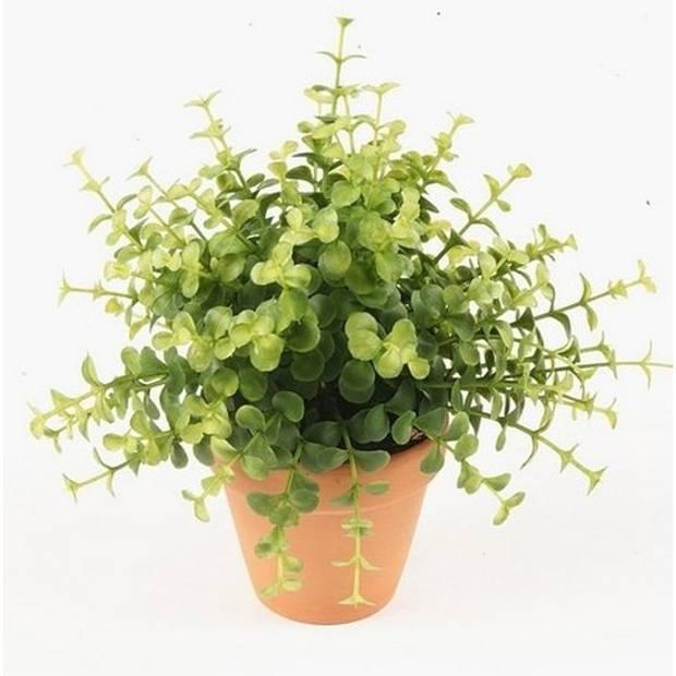 Kunstplant eucalyptus groen in pot 20 cm - Kamerplant groene eucalyptus