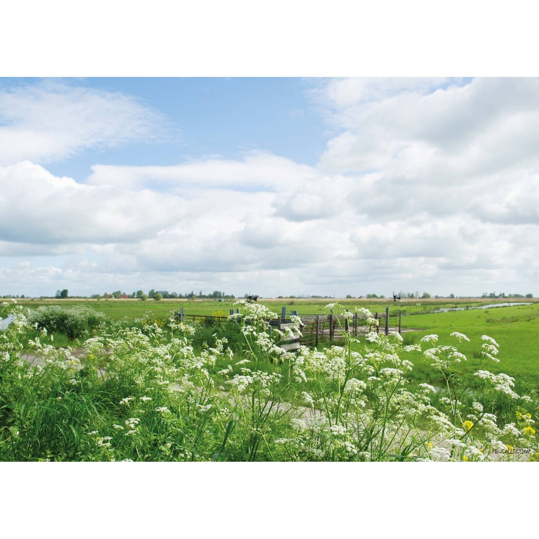 Tuinschilderij Parsly Field 70x130cm