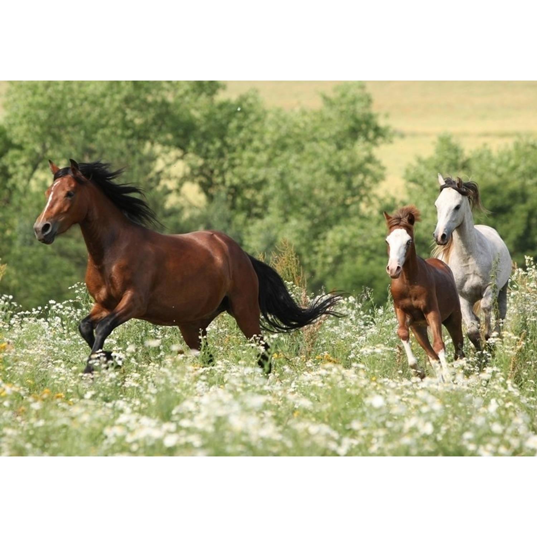 Tuindoek Paarden l150b210cm PB-Collection
