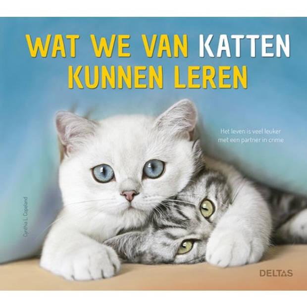 Wat We Van Katten Kunnen Leren