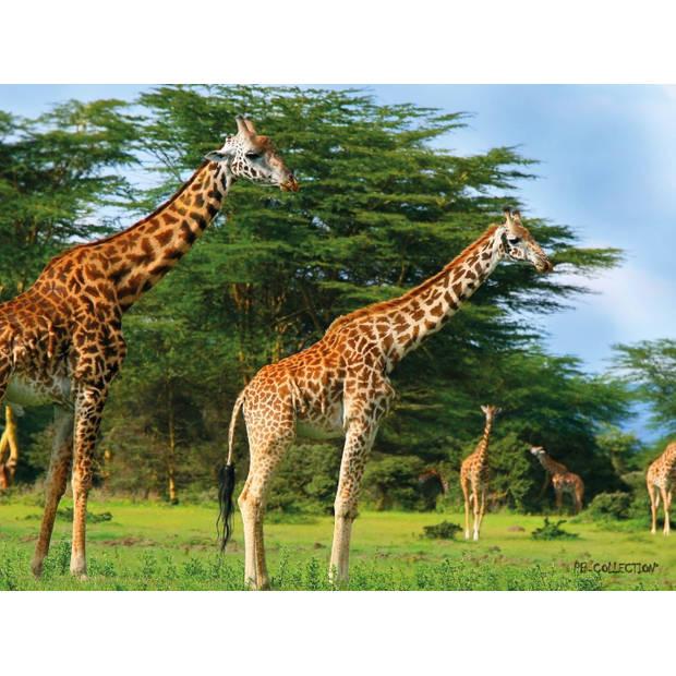 Tuinschilderij Africa Wild Giraffe 70x130cm