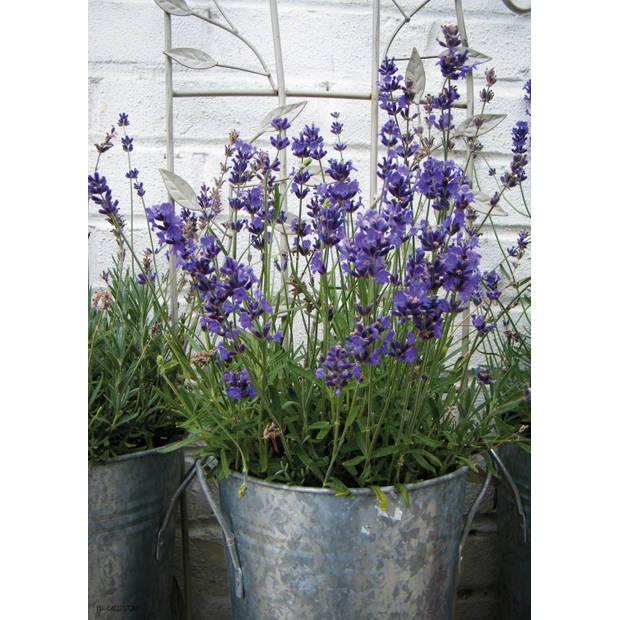 Tuinschilderij Lavender in Pot 70x130cm