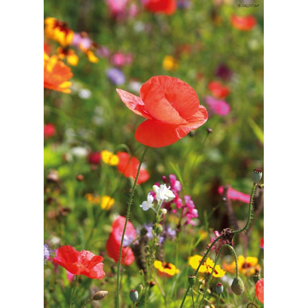 Tuinschilderij Poppy 70x130 cm
