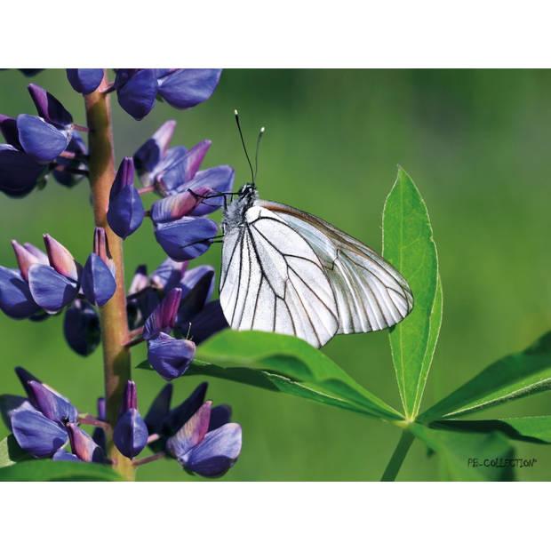 Tuinschilderij Lupin/Butterfly 70x130cm