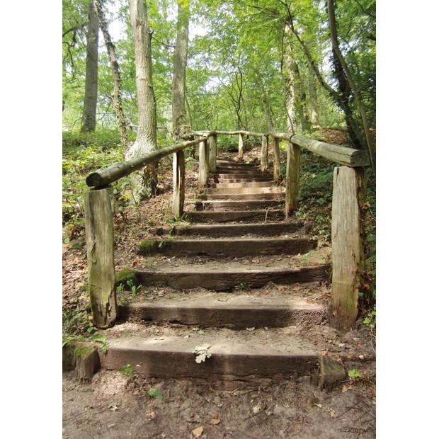 Tuinschilderij Forest stairs 70x130cm
