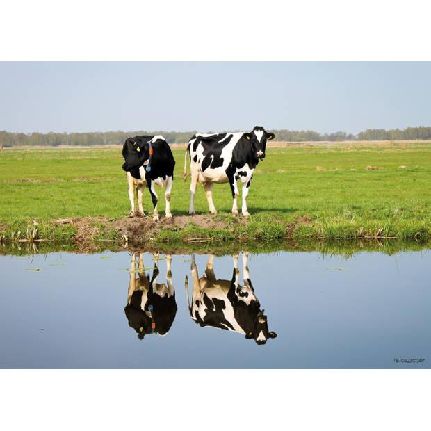 Tuinschilderij Cows with reflection 70x130cm