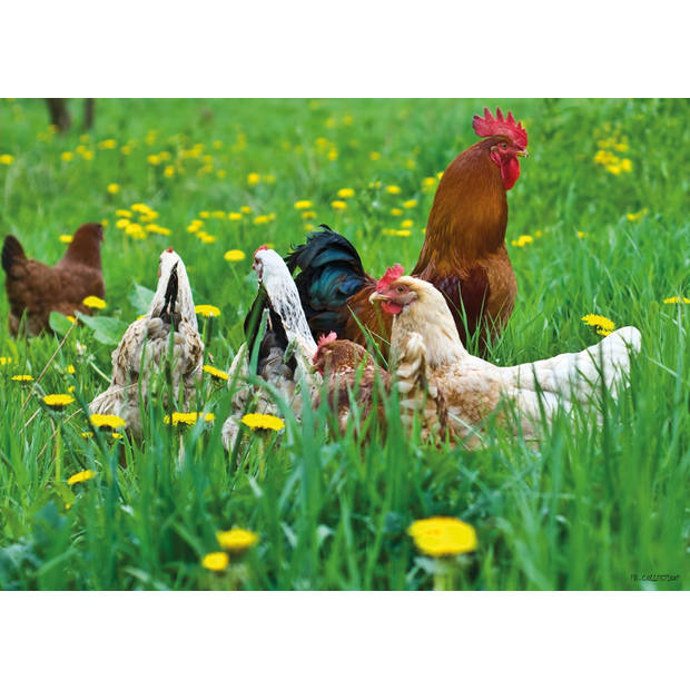 Tuinschilderij Chickens 70x130cm