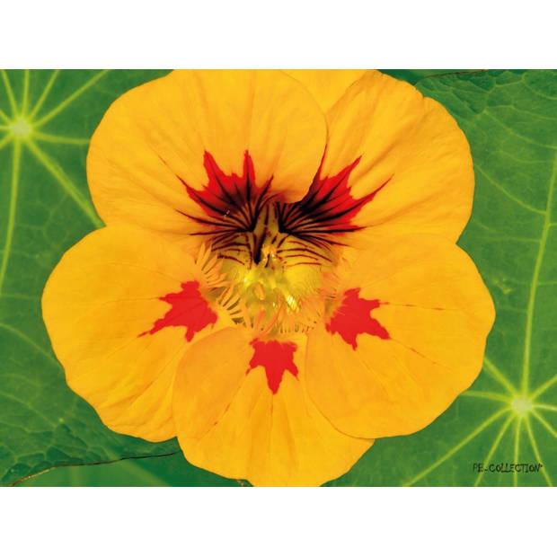 Tuinschilderij Nasturtium Close Up 70x130cm