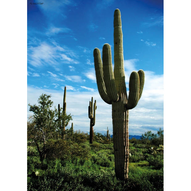 Tuinschilderij Raw Cactus 70x130cm