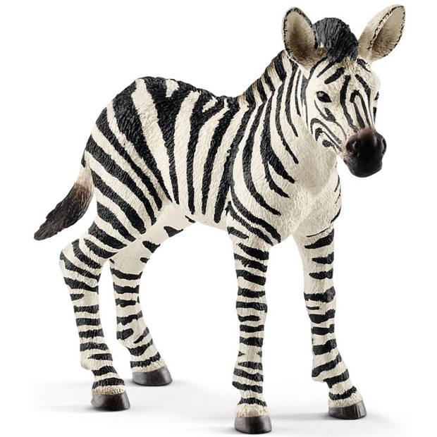 Zebra jong Schleich - Speelfiguur Schleich Wild Life -14811