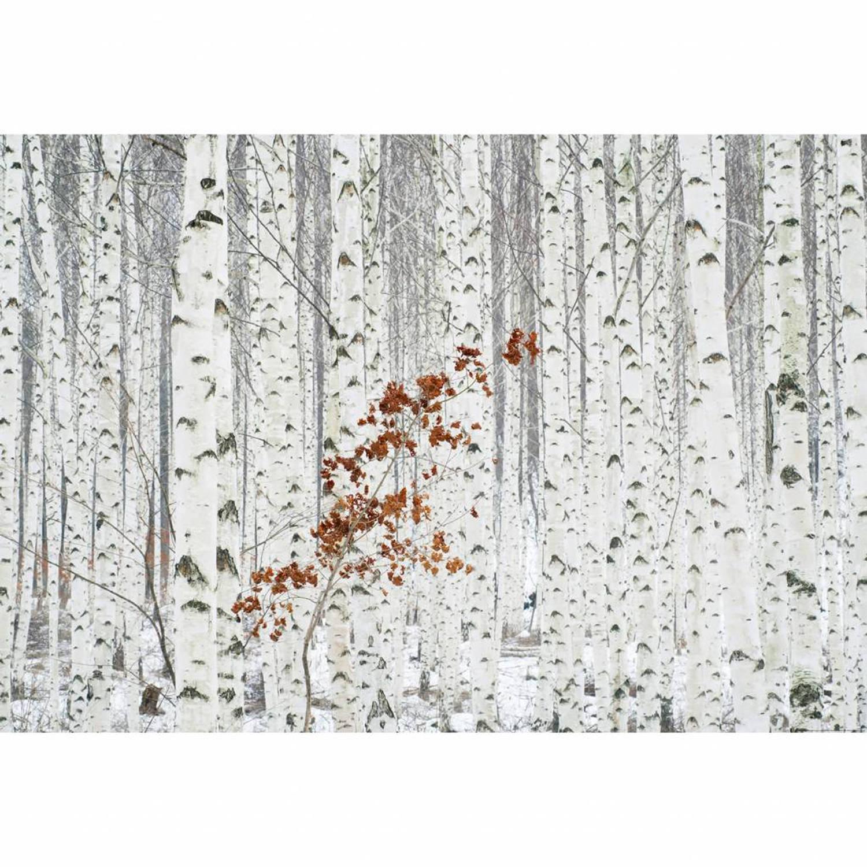 Wit Berken Bos - 4 delig - 368 x 254 cm - Multi