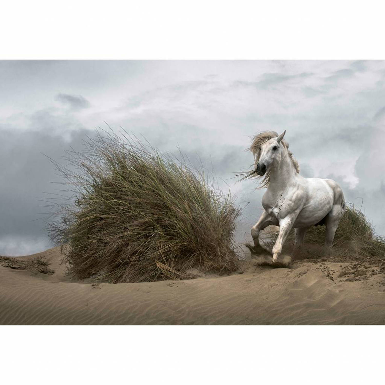 White wild horse - 4 delig - 368 x 254 cm - Multi