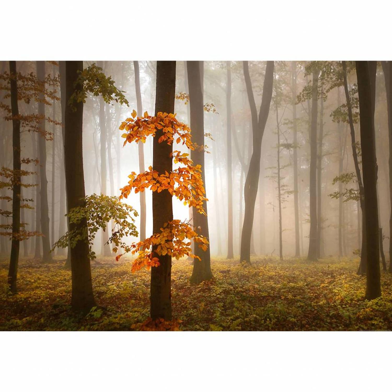 Foggy Autumn Forest - 4 delig - 368 x 254 cm - Multi