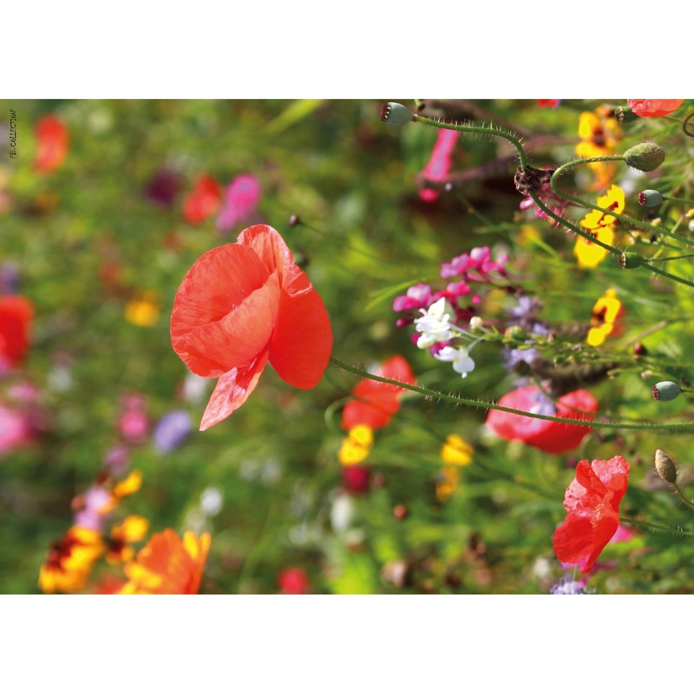 2 Stuks Tuinschilderij Poppy 50x70 Cm