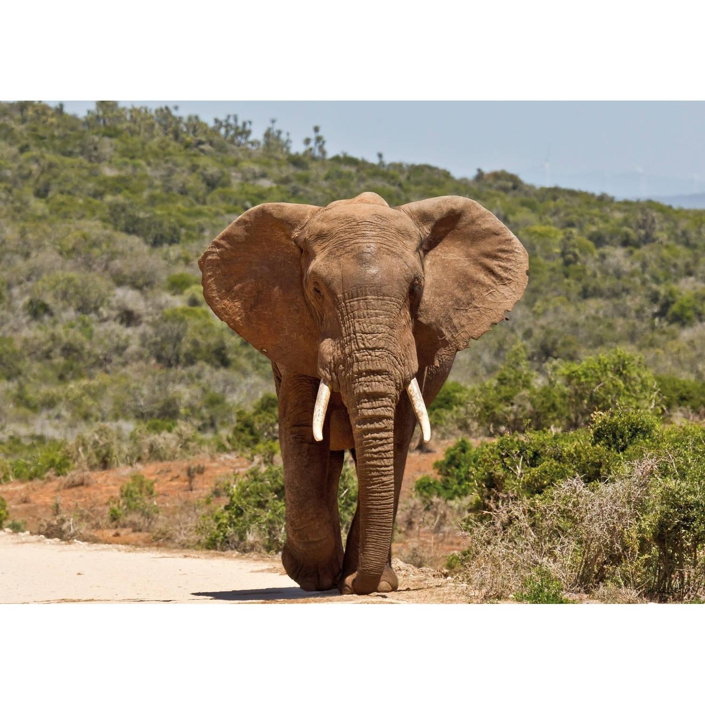 2 Stuks Tuinschilderij Africa Wild-elephant 50x70cm