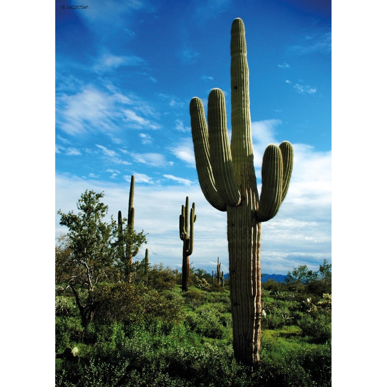 2 Stuks Tuinschilderij Raw Cactus 50x70cm