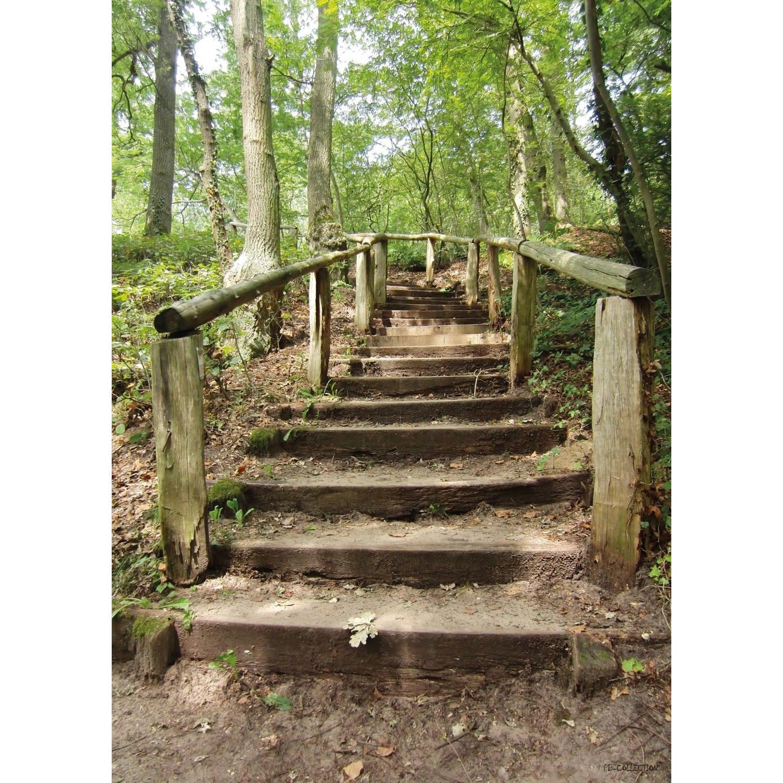 2 Stuks Tuinschilderij Forest Stairs 50x70cm