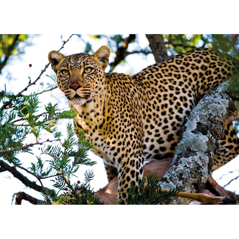 2 Stuks Tuinschilderij Africa Wild-cheetah 50x70cm