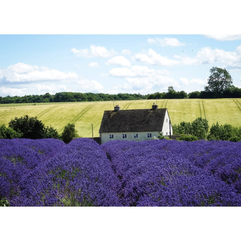 2 Stuks Tuinschilderij France Lavender 50x70cm
