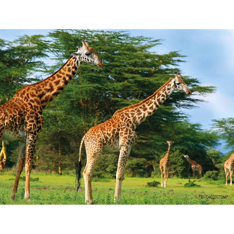 2 Stuks Tuinschilderij Africa Wild Giraffe 50x70cm