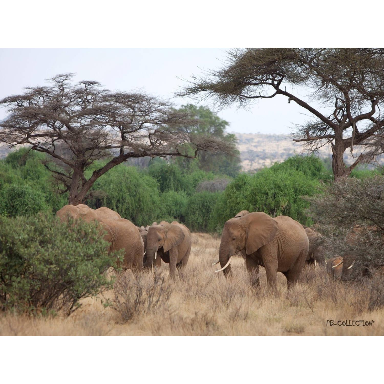 2 Stuks Tuinschilderij Africa Wild Elephant 50x70cm