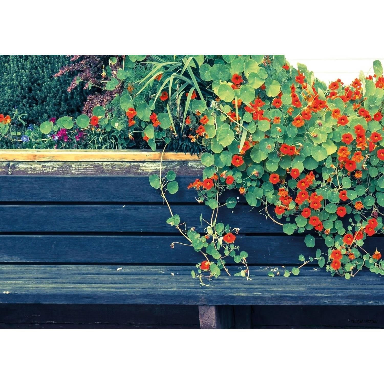 2 Stuks Tuinschilderij Nasturtium Bench 50x70cm