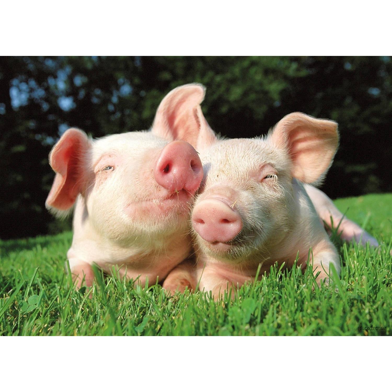 2 Stuks Tuinschilderij Pigs 50x70cm