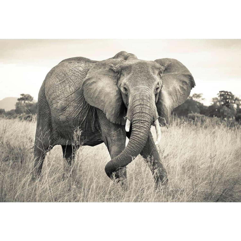 Komar Fotobehang National Geographic 368x248 cm XXL4-529