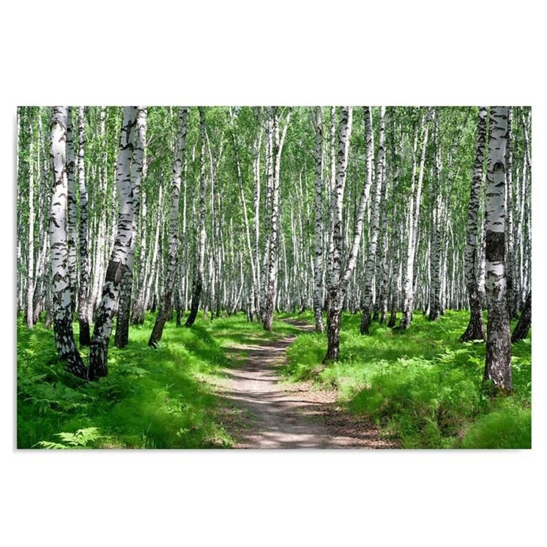 Schilderij - Pad door het berkenbos, wit, groen, 1 deel