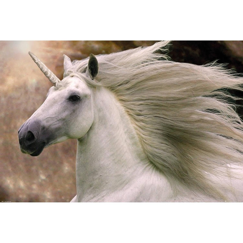 Poster Eenhoorn 61 X 91 Cm - Unicorn Bob Langrish - Fantasy Posters Woondecoratie -Wanddecoratie/muu
