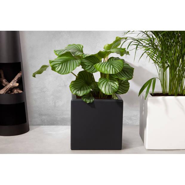 Enjoyplanters Enjoyplanter Polyester plantenbak Smooth 40x40x40 cm Antraciet-zwart