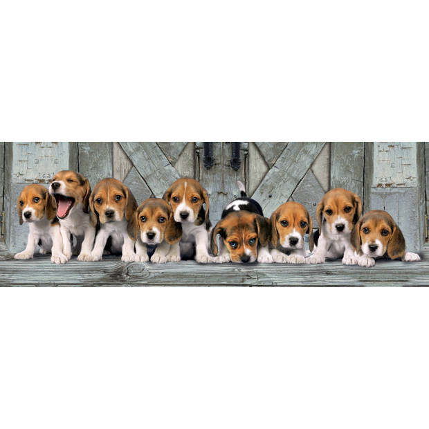 Clementoni puzzel Panorama Beagles 1000 stukjes