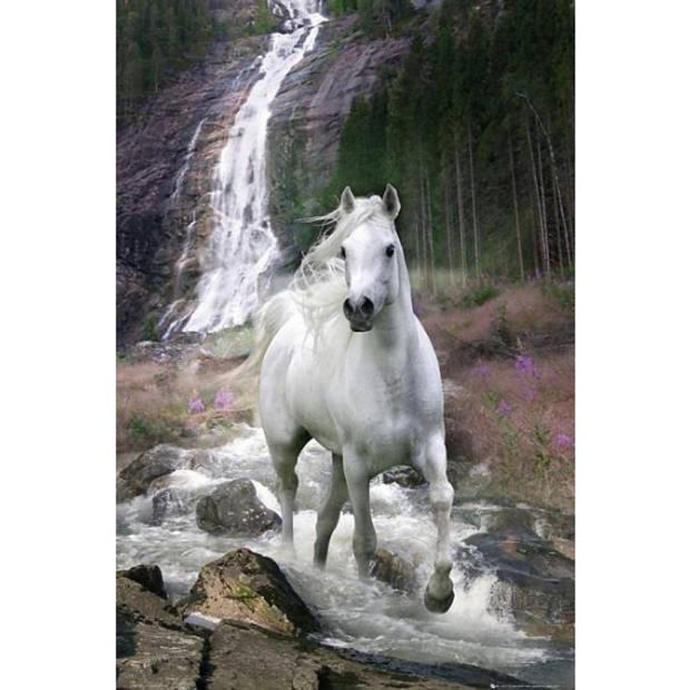 Poster wit paard 61 x 91,5 cm