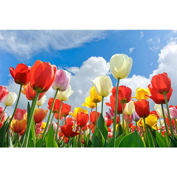 Schilderij Vrolijke Tulpen