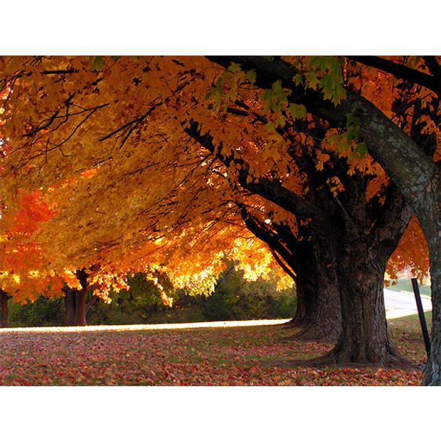 Schilderij Herfst Bomen