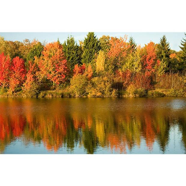 Schilderij Autumn Trees