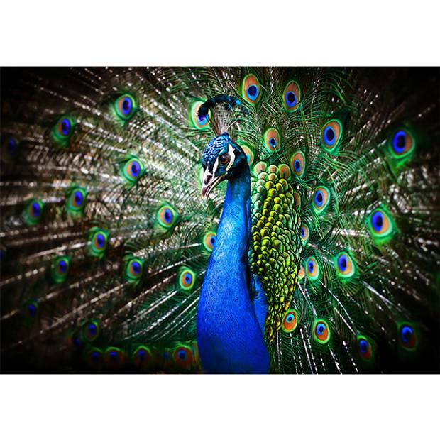 Schilderij Blauwe Pauw